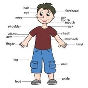 Materi Bahasa Inggris Kelas 3 Sd Tentang Part Of Human Body Menggunakan Metode Tpr Total